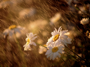 O perfume da chuva